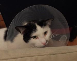 Jasper lampshade